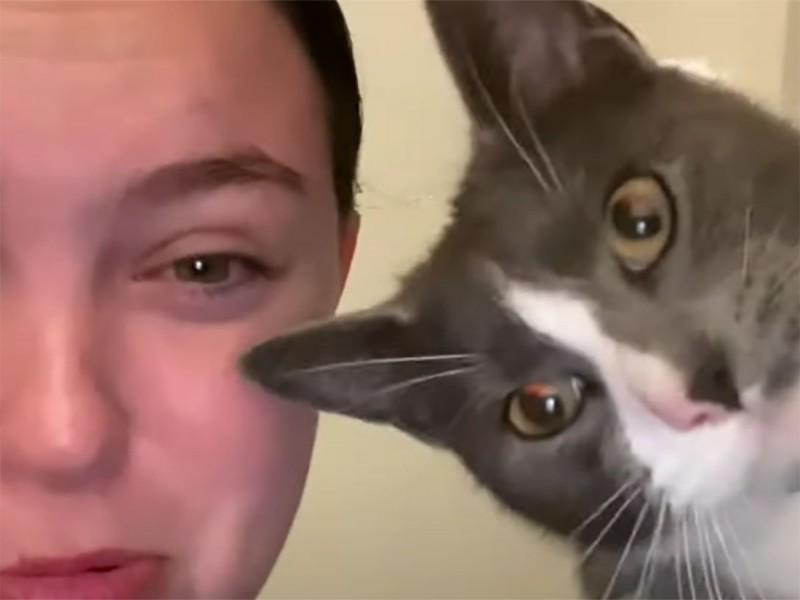 ¡Ay qué gruñón! Dueña imita maullido de su gato y este reacciona de esta manera
