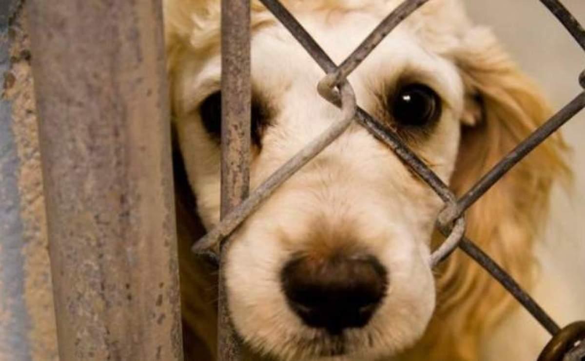 Llaman a luchar contra el matrato animal FGJEM y Diputados