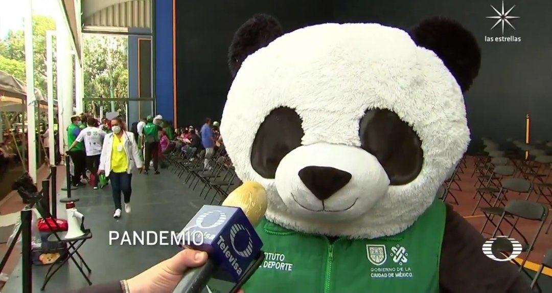 """El panda de la vacunación, """"Pandemio"""" se hace viral en redes sociales"""