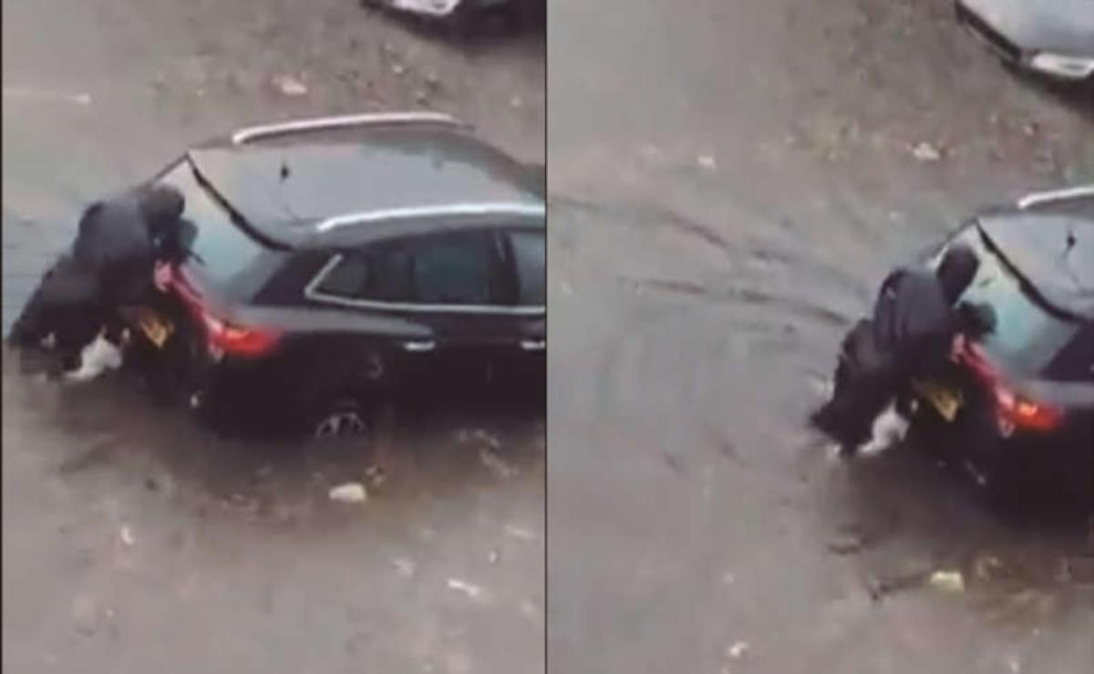 #VIRAL Lomito al rescate luego de que se descompusiera el coche de una mujer
