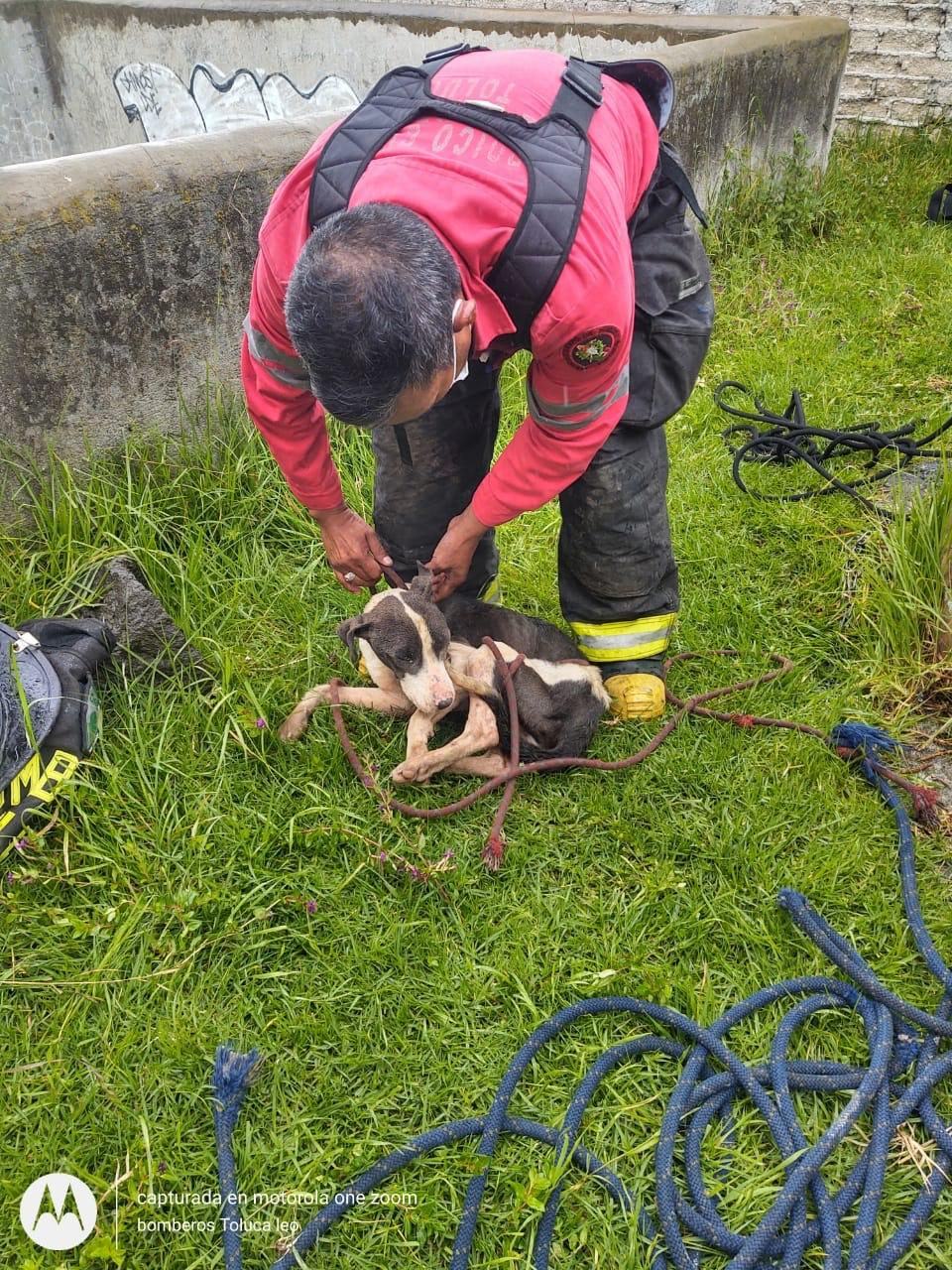 Bomberos de Toluca rescatan perro de un pozo