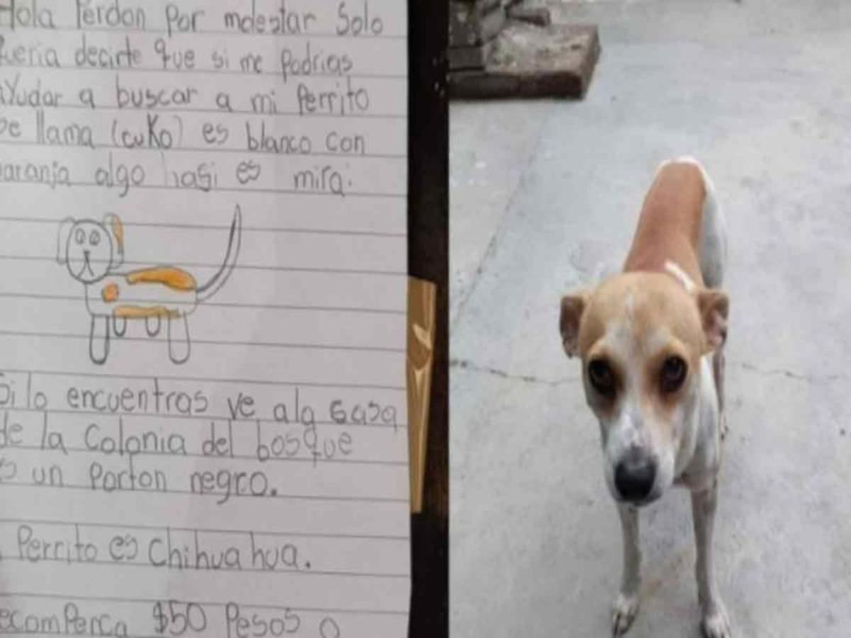 Dibuja niño a su perro perdido y ofrece 50 pesos de recompensa