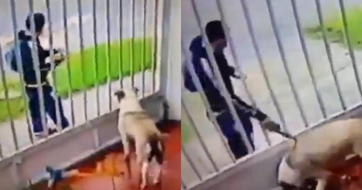 #VIDEO captan el momento en que un hombre arroja acido a un perro