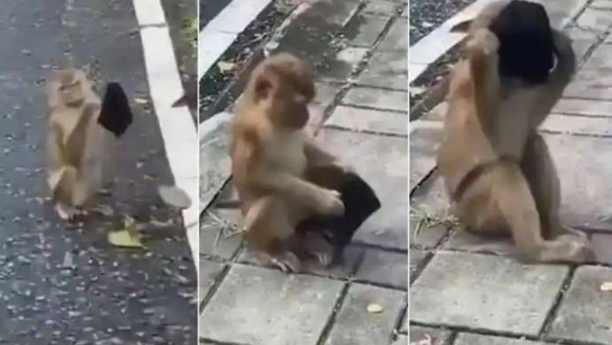 #VIDEO Captan a mono poniéndose un cubrebocas y se vuelve viral