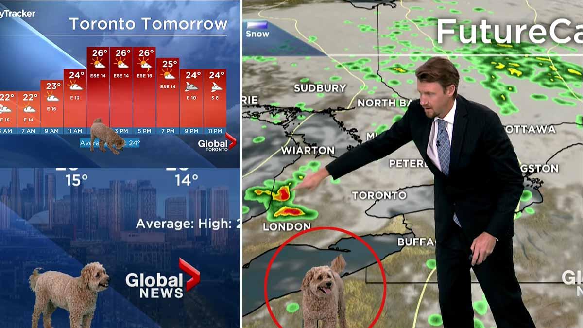 Un perro se cuela en el pronóstico del tiempo en directo
