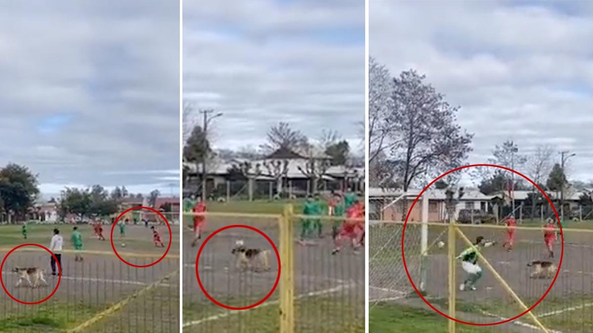 Canino chileno anota gol tras invadir cancha y se vuelve viral