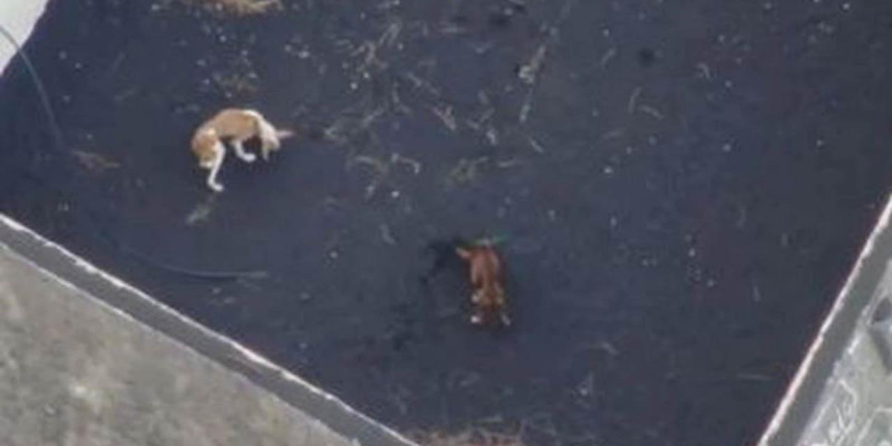 Drones alimentan a perros atrapados en la isla de La Palma