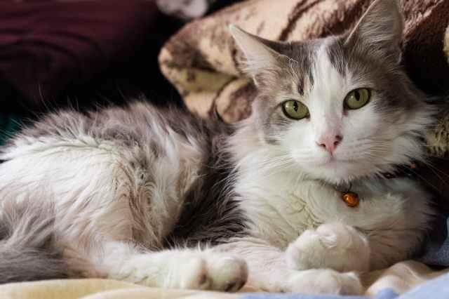 animal pet cute fur