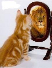 buena actitud, consejos, superacion, motivacional, gato, leon