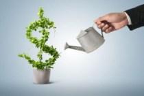 acciones, inversiones, invertir, largo plazo, dinero, planta, regando planta, cosechando