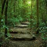 camino al éxito, mapa del exito, encrucijada, bosque, paisaje
