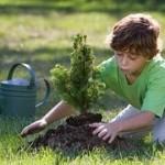 crecimiento personal, alcanzar tu potencial, éxito, felicidad, reforestación, sembrando un arbol