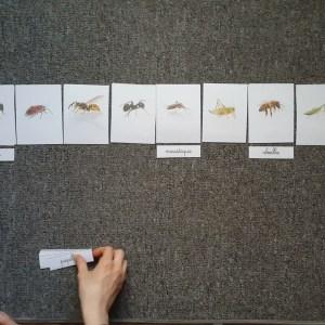 cartes de nomenclature insectes