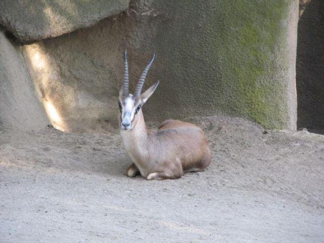 Еще один воспитанник зоопарка Сан-Диего
