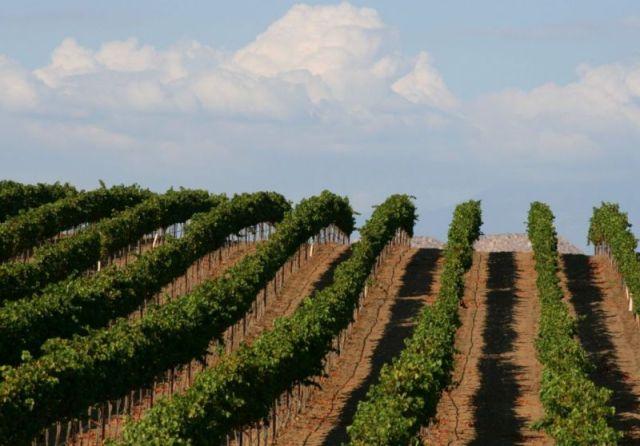 Темекула. Виноградники