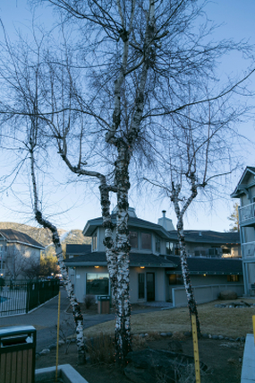 tahoe tree hotel