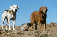 homeward bound animal welfare group
