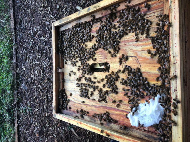 Active honey bees on Jan 13