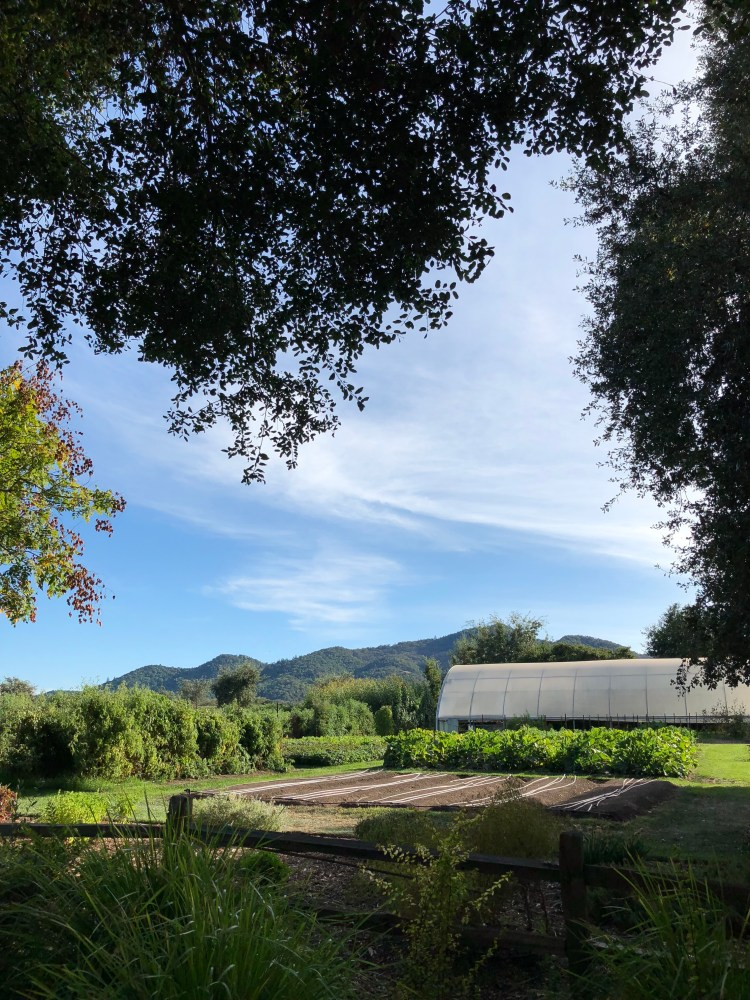 The French Laundry Culinary Garden in Yountville; our trip to napa valley and san francisco