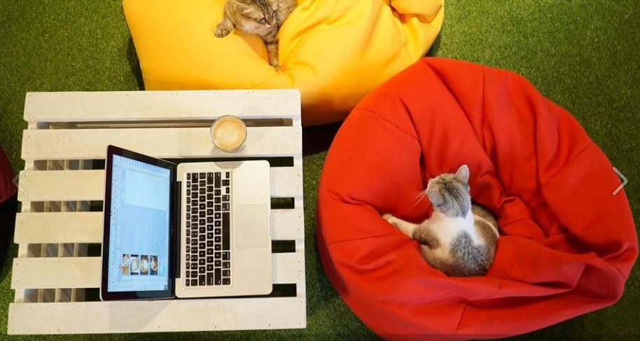 Cat paradise at @PurradiseCatCafeTTDI