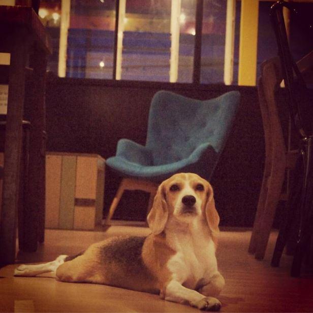 thehound-2