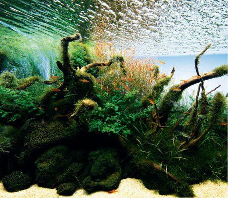 Sevenports - Nano Aquariums, Planted Aquarium Experts