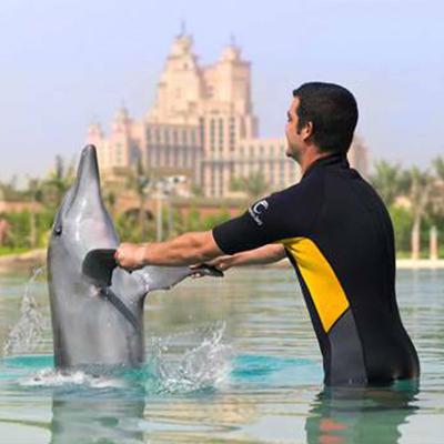 Tour in Dubai