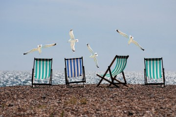 seagulls at the beach Loggerhead Marinelife Center and Surfrider Foundation seek ocean-friendly restaurants