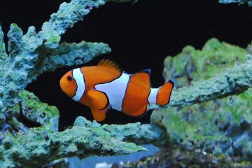 nemo clown fish The New England Aquarium is tackling wildlife trafficking at ports