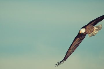 join the ocean conservancy to defend the endangered species act flying eagle