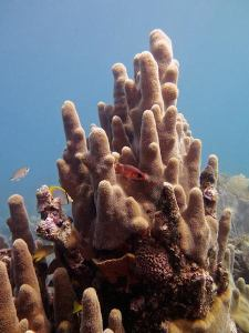 coral and sponge formations in cuba