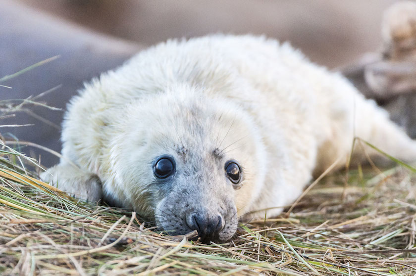 Mark Williams - Grey Seal