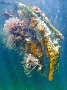 coral underwater in cuba