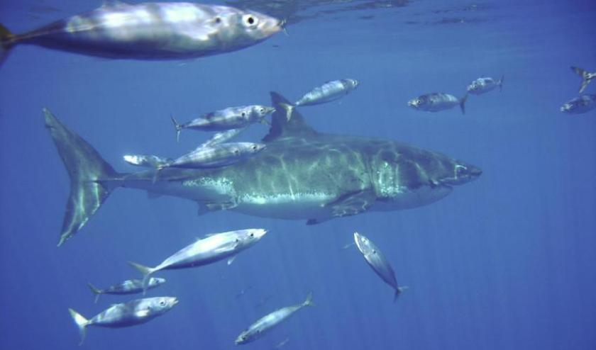 sharks and fish swimming in a marine protected area