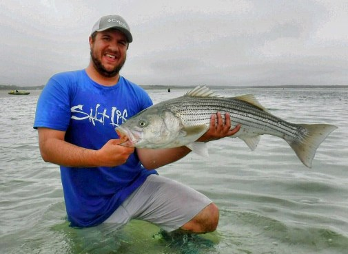 brewster striper