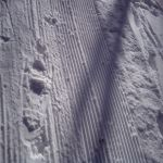 Winter Trail Running can be done in snowshoes