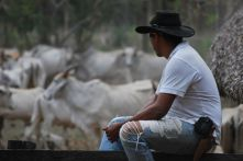 Vet, Los Llanos