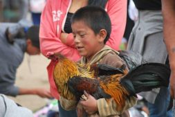 Animal market, Otavalo, Ecuador