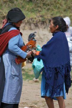 Chicken trading, Otavalo