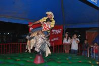 Some people went for the safer option on rodeo night... San Ignacio.