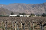 Vineyard, Cafayate
