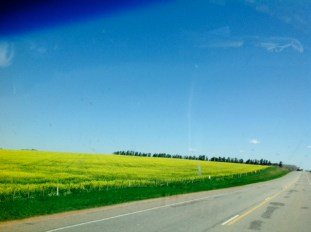 Driving through Uruguay was really pretty and so neat and tidy!