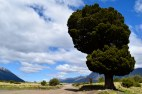 Lanin National Park, Argentina.