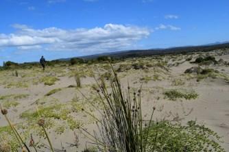 Dunes, Chepu, Chiloé