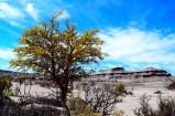 Parque Provincial Ischigualasto
