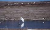Egret, Potrerillos, Mendoza