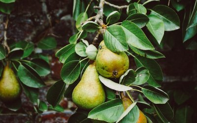 Planning for Fruitfulness