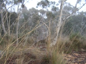 cobwebs in the frost
