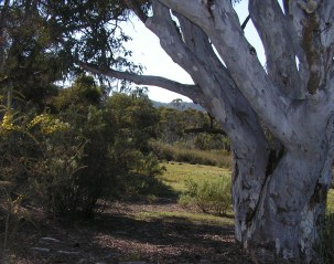 old tree at the bottom of the hill