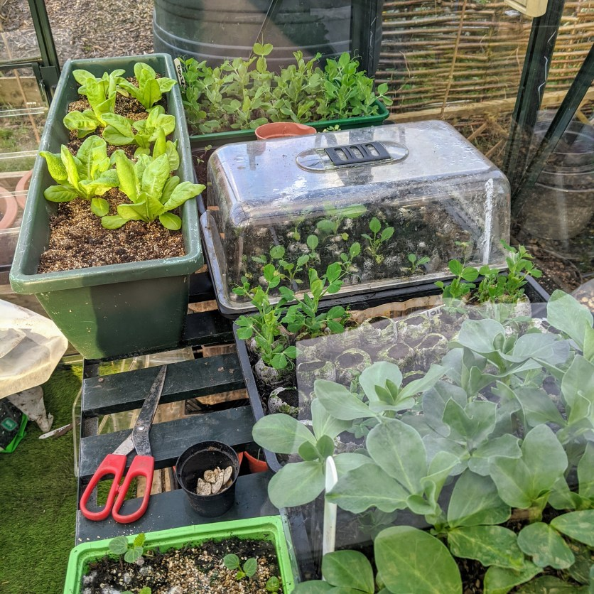 The greenhouse in full swing
